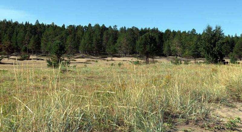 Nu bildas nya naturreservat i Norrbotten