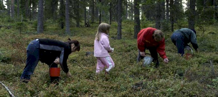 Mellerstön i Piteå skärgård
